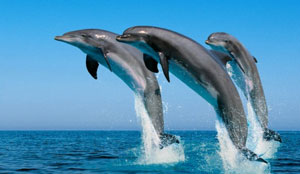 dolphins spotting gran canaria